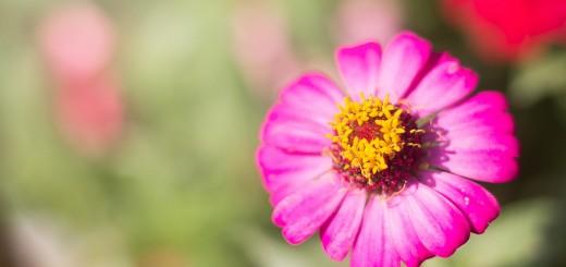 flowers-1393792_960_720